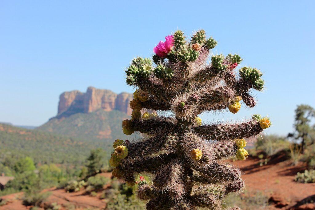 Flowering desert plants.